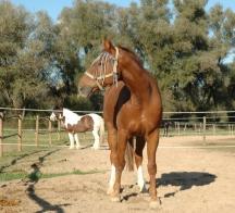 2 Pferde Paddock 216 x 196