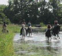 Pferde im Wasser 216x196